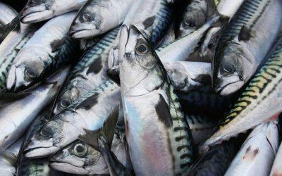 Mackerel stock in good shape, says MINSA