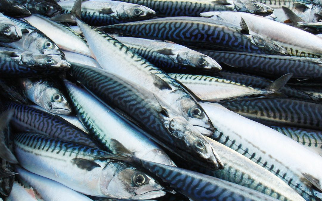 UK Seafood fund seeks ideas for innovation projects up to £250k