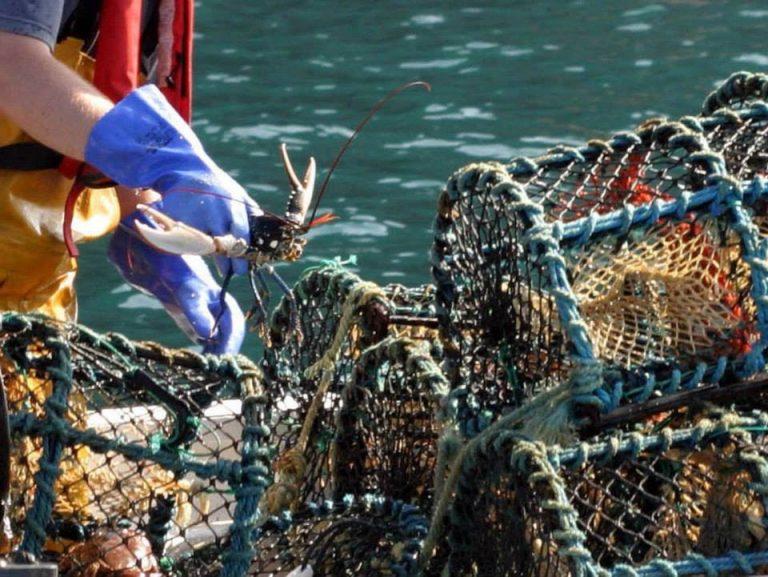 Inshore fishing groups looking forward to Irish Skipper Expo