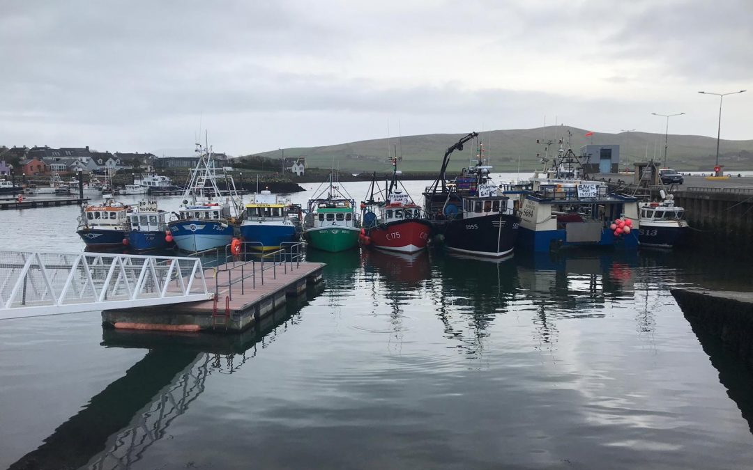 Inshore fishermen call for an end to 'decades of failure' on seal issue