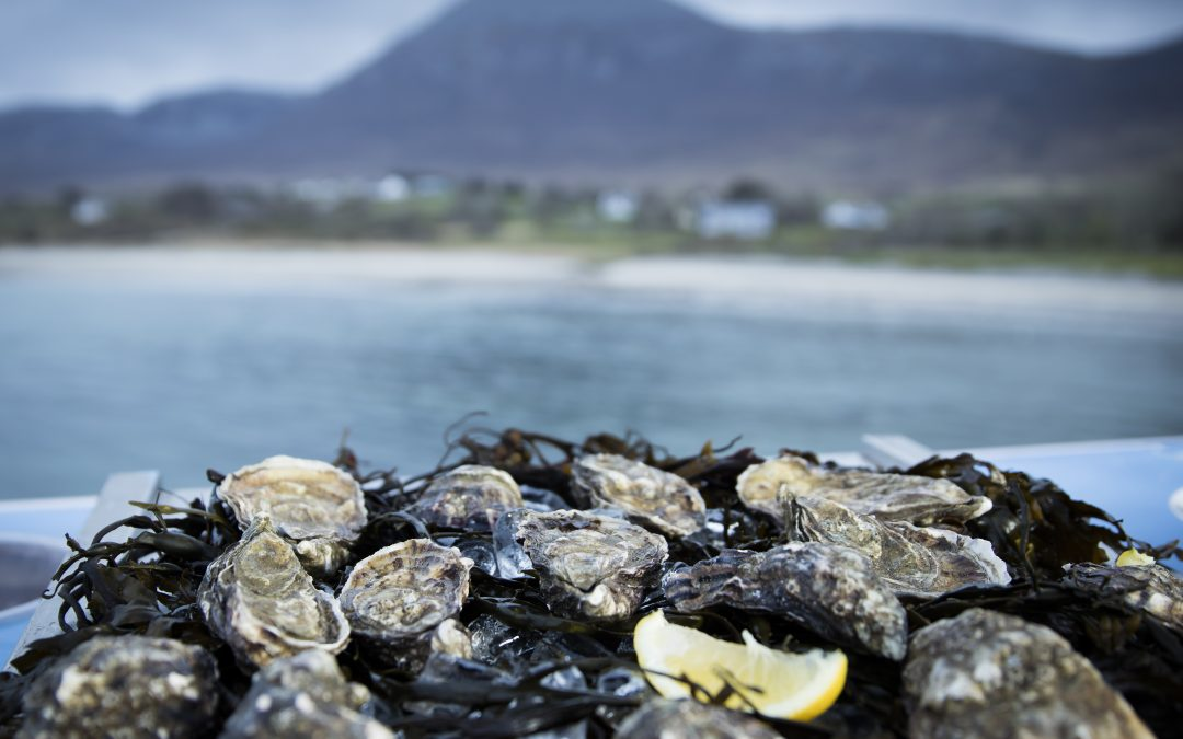 Ireland's Oyster Producers Rise to Market Challenges