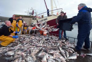 Dingle fishermen with damaged stock