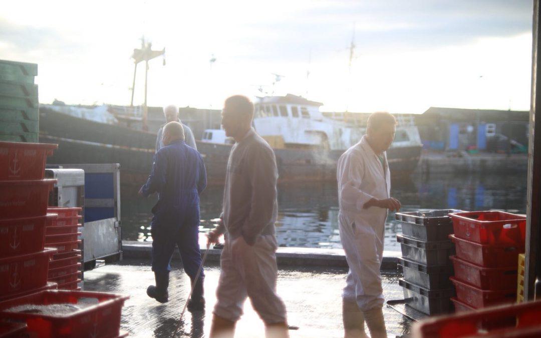 #FishToYourDoor sees Cornwall rekindle love for fresh fish