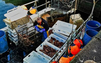 Supports announced for Scottish seafood industry hit £22.5 million