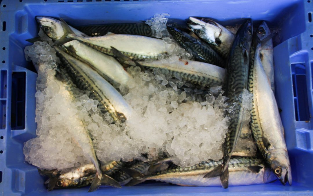 UK: Seafish launches free marketing workshops for seafood industry