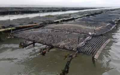 Pandemic leaves Irish aquaculture facing unprecedented disruption