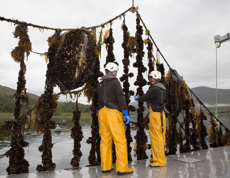 Plans to grow aquaculture in England underway