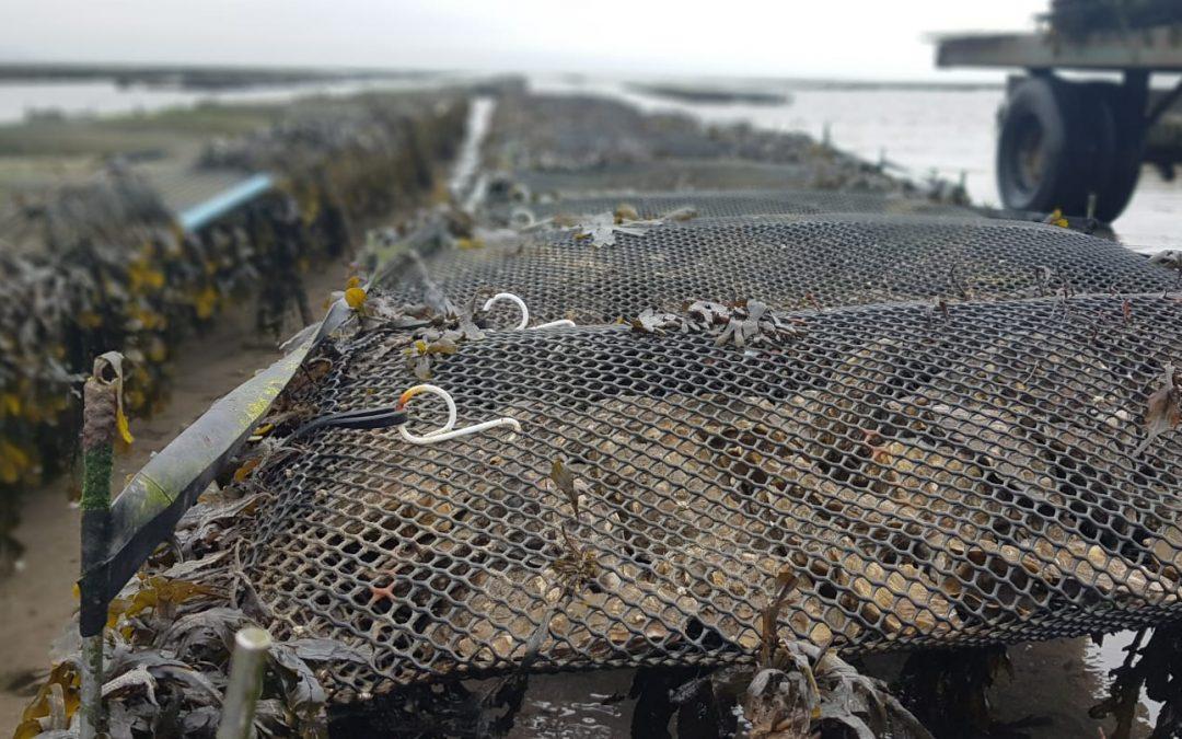 Cowen announces €3.4 million investment in 15 aquaculture enterprises