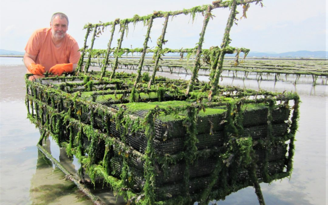 Inventor creates revolutionary way to farm oysters