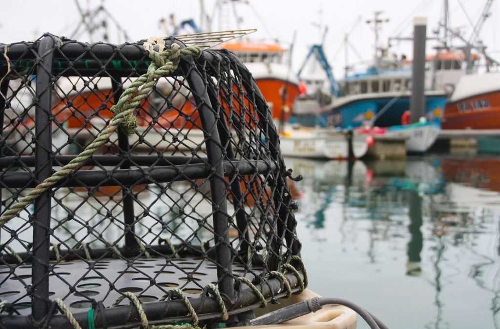 Innovation Fund prioritises sustainability in the UK seafood sector