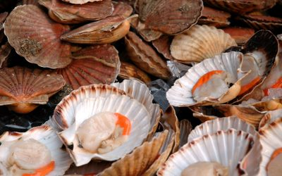 UK: Dogger Bank scallop closure extended
