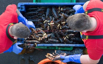 First Yorkshire Marine Research Centre Opens in Bridlington