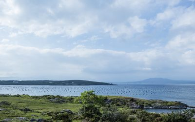 Environmentally Sustainable Practices Of Irish Aquaculture Focus Of December Documentary