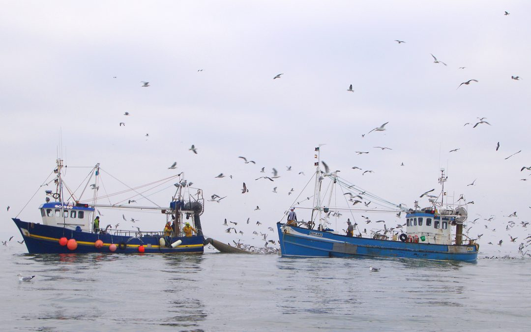 No Restriction On Sprat Fishing As Minister Gets Appeal Date On 6 Mile Ban Ruling
