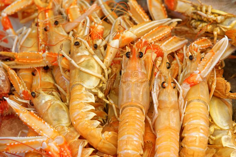WANTED – Good quality live Brown Shrimp (Crangon Crangon)