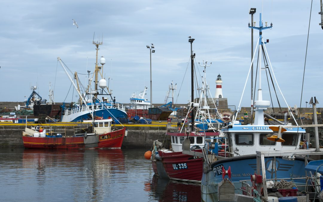 Profit and turnover down as UK fishing fleet weathers a challenging year